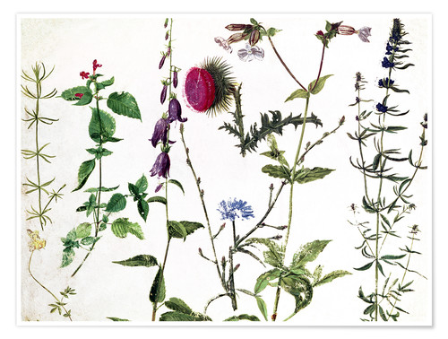 Premium poster Eight Studies of Wild Flowers