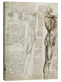 Canvas  The muscles - Leonardo da Vinci