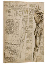 Wood print  The muscles - Leonardo da Vinci