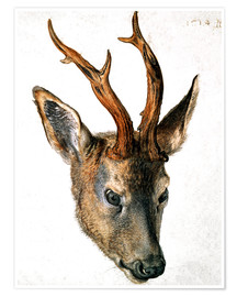 Poster  Head of a Roe Deer - Albrecht Dürer