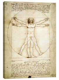 Canvas  The Proportions of the human figure - Leonardo da Vinci