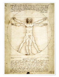 Poster  The Proportions of the human figure - Leonardo da Vinci
