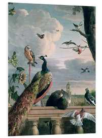 Foam board print  Palace of Amsterdam with Exotic Birds - Melchior de Hondecoeter