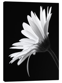 Canvas print  The flower - Falko Follert