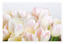 Premium poster Pastel-colored tulips 06
