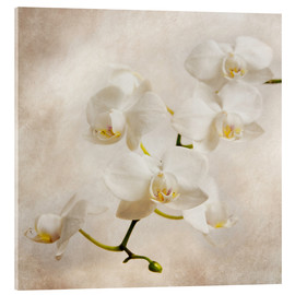 Acrylic glass  White orchid - Hannes Cmarits