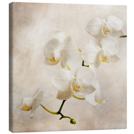 Canvas  White orchid - Hannes Cmarits