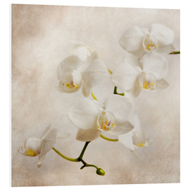 Forex  white orchid - Hannes Cmarits