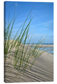 Canvas print  Dune grasses before playscape - Susanne Herppich