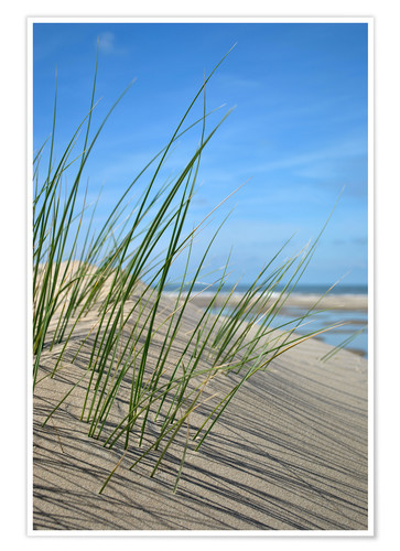 Premium poster Dune grasses before playscape