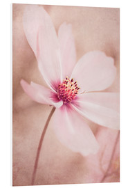Foam board print  Romantic Cosmea - INA FineArt