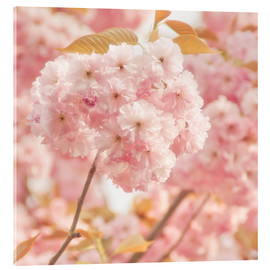 Acrylic print  Japan Cherry - INA FineArt