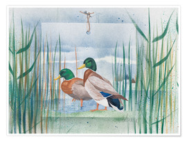 Premium poster  Pair of wild ducks - Franz Heigl