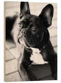 Wood print  French Bulldog - Falko Follert