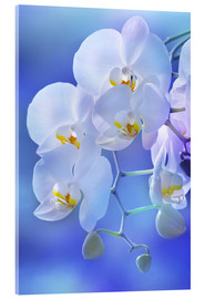 Acrylic glass  Orchid - Atteloi