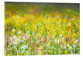 Acrylic glass  Spring Meadow - Suzka