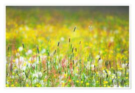Premium poster Spring Meadow
