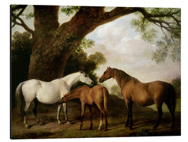 Aluminium print  Two Shafto Mares and a Foal - George Stubbs