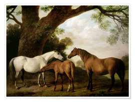 Poster Two Shafto Mares and a Foal