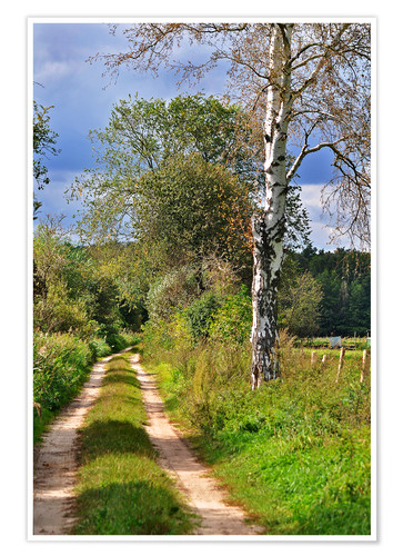 Premium poster Forest path with Birch