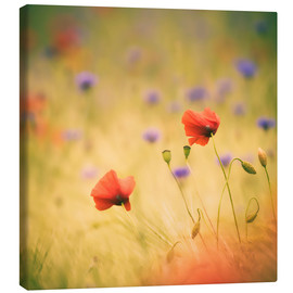 Canvas print  Wind Poppy - Moqui, Daniela Beyer
