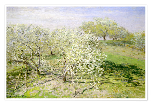 Premium poster Flowering apple trees in spring