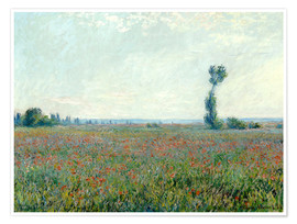 Premium poster Field with poppies