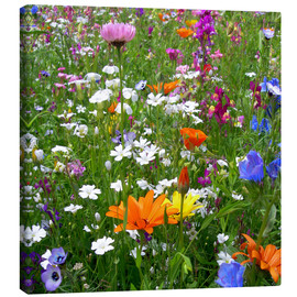 Canvas  Flowers Meadow - blackpool