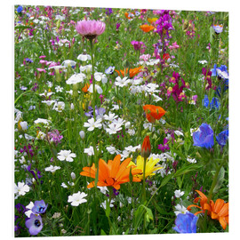 Forex  Flowers meadow - blackpool