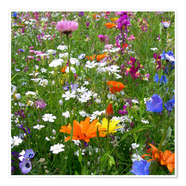 Premium poster Flowers meadow