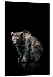 Foam board print  Brown bear - Werner Dreblow