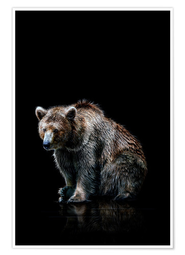 Premium poster Brown bear