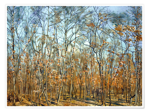 Premium poster The beech forest