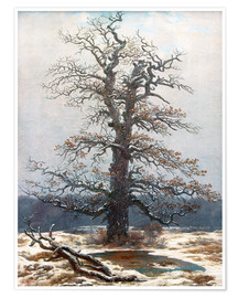 Premium poster Oak Tree in Snow