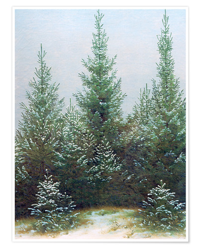 Premium poster Fir Trees in Snow
