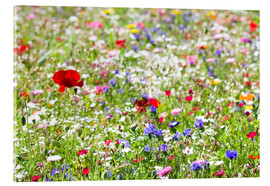 Acrylic print  Colorful Meadow - Suzka