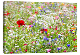 Canvas print  Colorful Meadow - Suzka