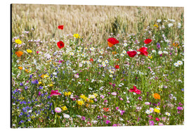 Aluminium print  Summer meadow - Suzka