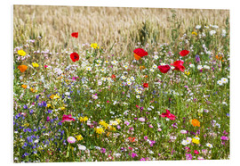 Foam board print  Summer meadow - Suzka