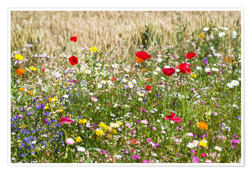 Poster Summer Meadow