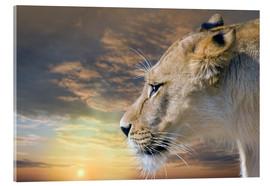 Acrylic print  Lioness at sunset - Werner Dreblow