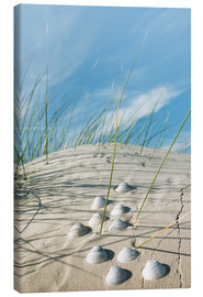 Canvas  Dune with sea shells - Reiner Würz RWFotoArt