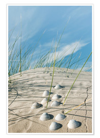 Premium poster Dune with sea shells