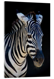 Acrylic glass  zebra : study I - Timo Geble