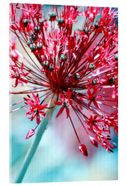 Acrylic glass  Allium pink - Atteloi
