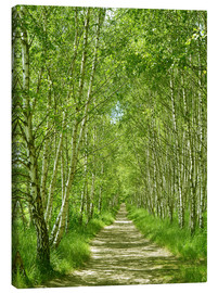 Canvas  Birch forest - Atteloi