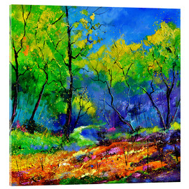 Acrylic print  Enchanted forest - Pol Ledent