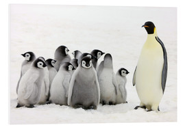 Foam board print  Emperor penguin with chicks - Keren Su