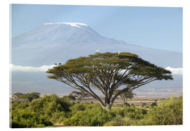 Acrylic print  Big tree in front of the Kilimanjaro - Joe & Mary Ann McDonald