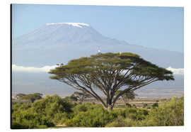 Aluminium print  Big tree in front of the Kilimanjaro - Joe & Mary Ann McDonald